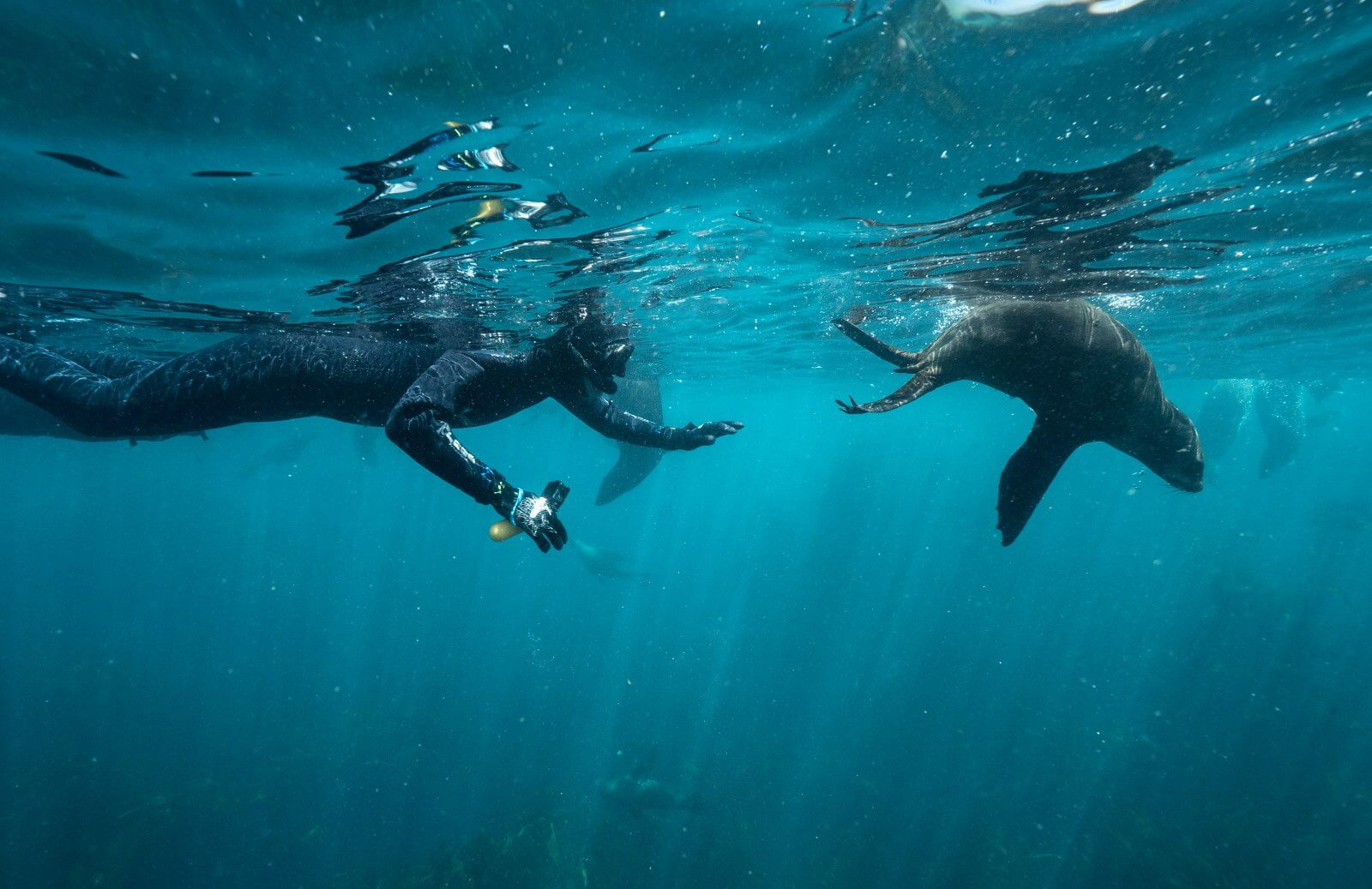 Meet the inhabitants of Seal Island