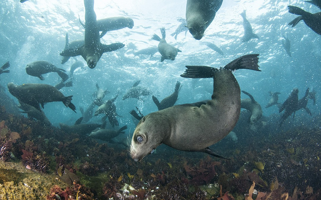 Meet the inhabitants of Seal Island