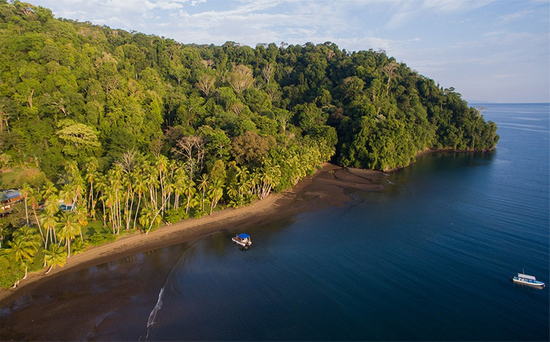 The natural treasures of Golfo Dulce